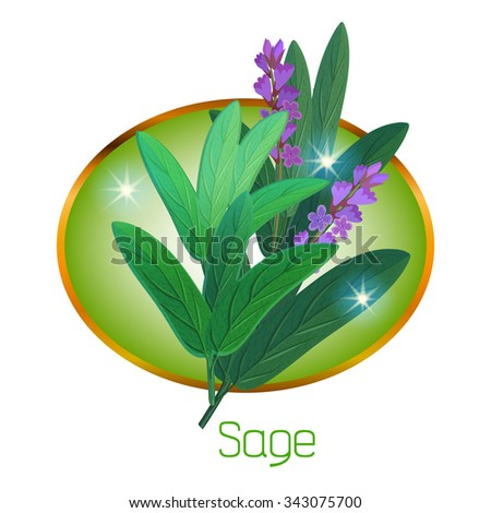 Vector illustration with the golden frame in which is located culinary herb. In the center of frame shown plant, which is called the sage.