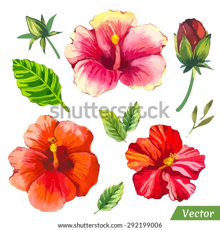 vector illustration watercolor flowers painting red stock vector