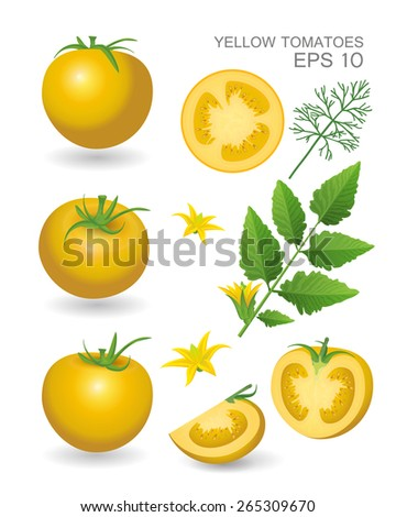 Vector illustration. Yellow fresh realistic tomatoes with leaves, blossom and dill isolated on white background - stock vector