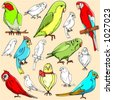 Vector illustrations of parrots in color, and black and white renderings. - stock vector