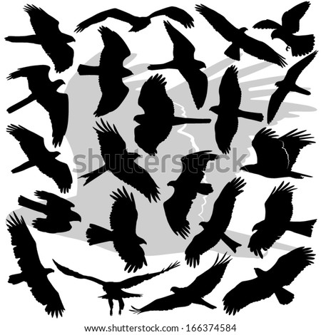 Vector illustrations set of the high in detail silhouettes of the Birds Of Prey (raptors). Eagles, Sea Eagles, Hawks, Kites, Harriers, Buzzards, Falcons, Accipiters, Ospreys, Buteos. - stock vector