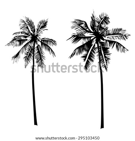 Vector illustrations Set tropical palm trees with leaves on a white background, mature and young plants, black silhouettes isolated on white background.  - stock vector