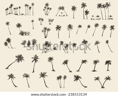 Vector illustrations silhouette of palm trees, hand drawn, sketch, forty pieces. - stock vector