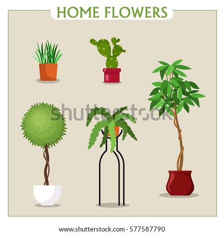 Indoor Plants In Pots. Collection Flowers In Flat Style