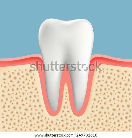 Vector image of a human tooth - stock vector