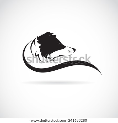 Vector image of an border collie dog on white background - stock vector