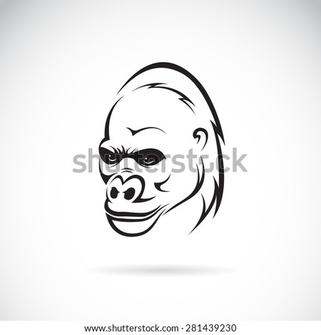 Vector image of an gorilla head on white background - stock vector