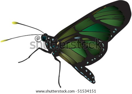 Vector image of butterfly from Ecuador. Raster image also available - stock vector