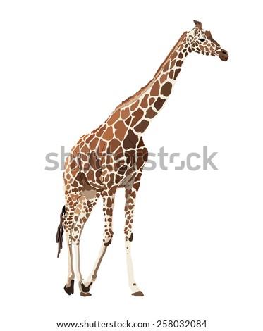 Vector image of giraffe - stock vector