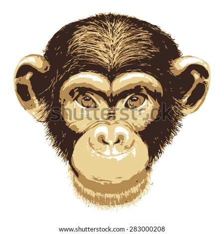 Vector image of monkey face on white background - stock vector