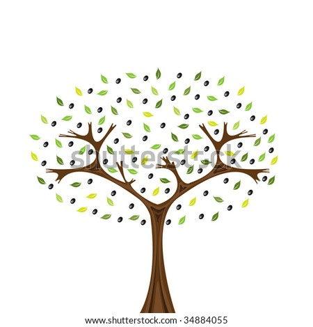 Vector image of olive tree isolated on white