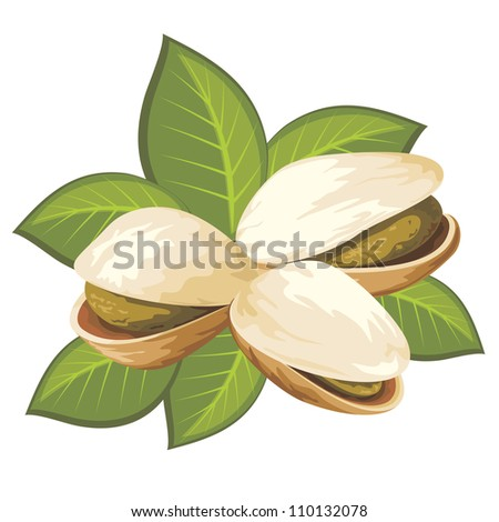 vector image of pistachio nuts with leaves - stock vector