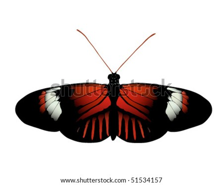 Vector image of Postman butterfly of Ecuador. Raster image also available - stock vector