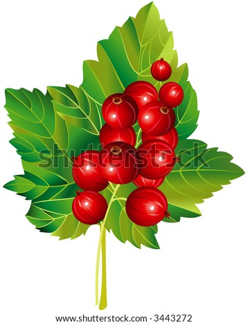 Vector image of red currant - stock vector