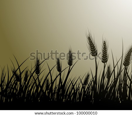 Vector image of wheat field - stock vector