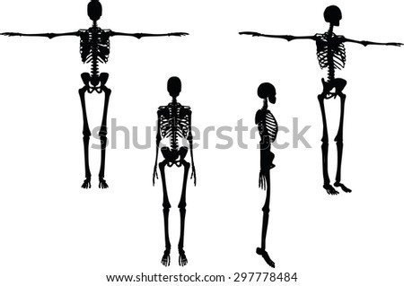 Vector Image - skeleton silhouette in default pose isolated on white background