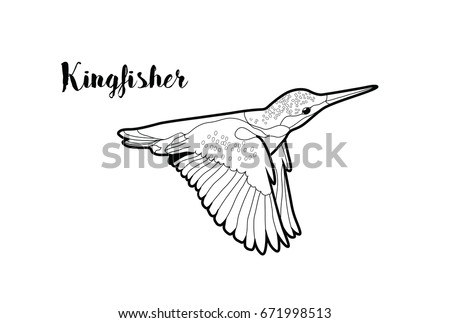 Vector Isolated Kingfisher Bird Flying. Graphic For Coloring Page.