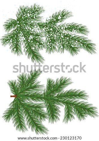 Vector isolated Pine branch with snow - stock vector