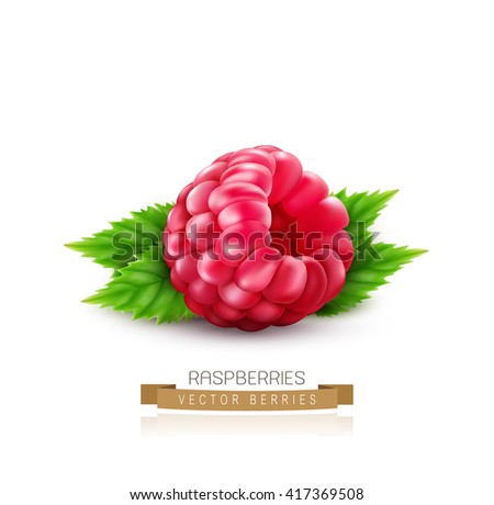 vector isolated raspberry with green leaves on a white background - stock vector