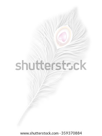 Vector isolated white peacock feather. EPS 10 - stock vector