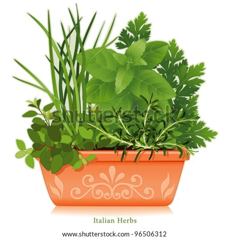 vector - Italian Herb Garden. Mediterranean cuisine, left- right: Oregano, Garlic Chives, Sweet Basil, Flat Leaf Parsley, Rosemary, clay flowerpot planter, floral design. EPS8 compatible. See series. - stock vector