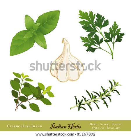 vector - Italian Herbs. Traditional spices for cooking: Sweet Basil, Garlic, Italian Flat Leaf Parsley, Italian Oregano, Rosemary, isolated on white. EPS8 compatible. - stock vector
