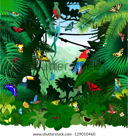 Vector Jungle Rainforest with Frog, Toucan, quetzal, humming-birds, butterflies, Ara and Green Snake - stock vector