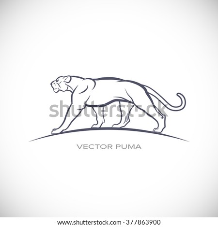 Vector label with a picture of cougar - stock vector