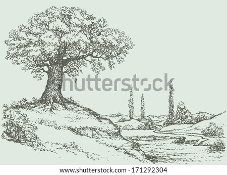Vector landscape. Mighty oak tree grows on top of a hill above the river valley  - stock vector