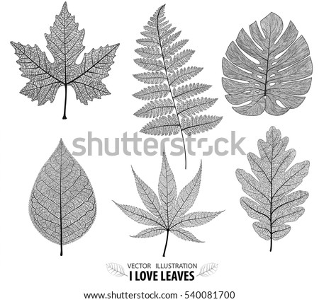 Vector leaves isolated and black.