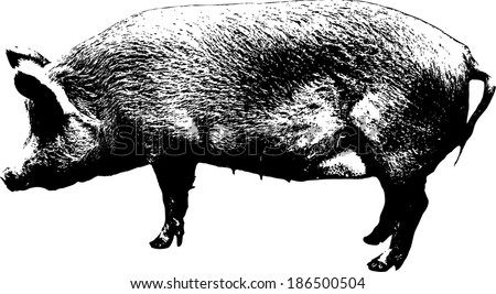 Vector lineart of a fat female hog.  - stock vector