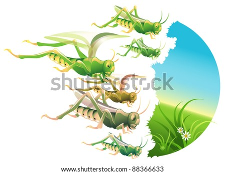 Vector locust swarm eating everything in their path - stock vector