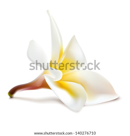 Vector magnolia flower. Perfect shadow on different backgrounds (without white edges).