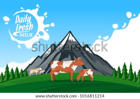 Vector milk illustration with milk splash in the background. Summer mountains landscape with cows and calves.
