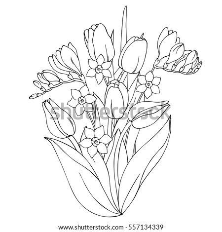 Vector Monochrome Contour Illustration Of Daffodil Narcissus Tulip Freesia Flower Bouquet