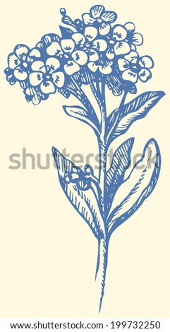 Vector monochrome drawing of a shading ink on paper. Sprig of Forget-me-not (Myosotis arvensis). Flowering plants in the family Boraginaceae - stock vector