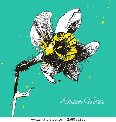 Vector narcissus sketch. Hand draw flower. Eps10 - stock vector