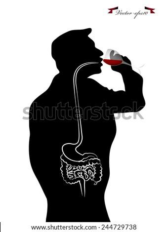 vector of inside human body drinking wine - stock vector