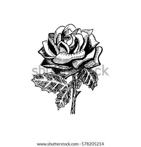 vector of rose black and white graphic
