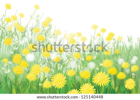 Vector of spring dandelions flowers isolated on white background.