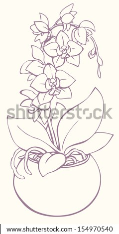Vector outline drawing. Flowering branch of orchid, growing from a round vase - stock vector