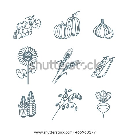 Vector outline vegetables and cereal grains icons set. Autumn harvest line art illustration. Design elements for agriculture, harvesting, gardens, farm and farming organic products.