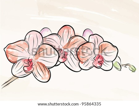 Vector Painted Orchid - stock vector