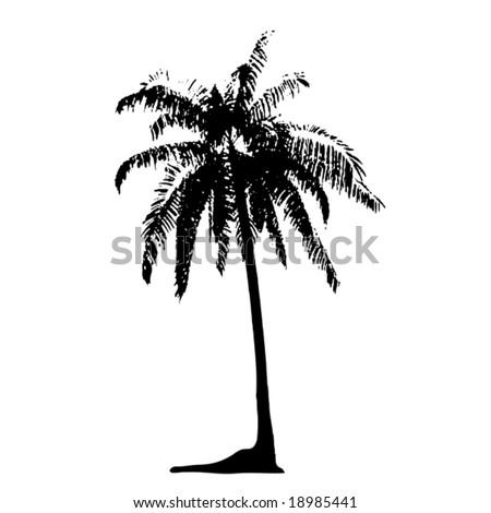Vector palm tree - stock vector