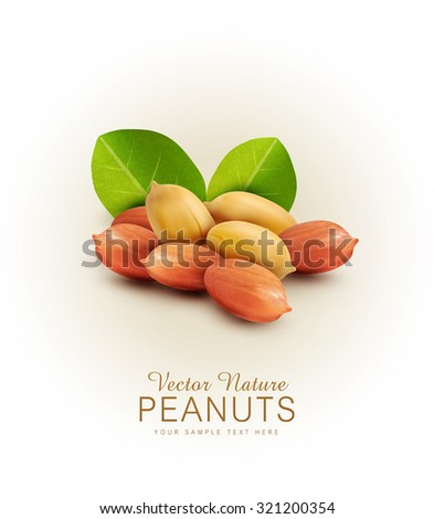 Vector peanut kernels isolated with green leaves (design element) - stock vector
