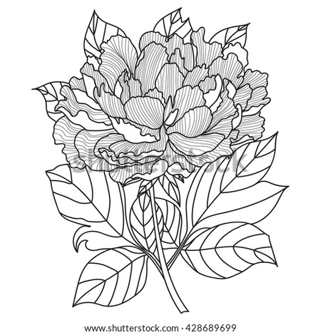 Vector Peony Coloring Book Page Adults Stock Vector 428689699 ...