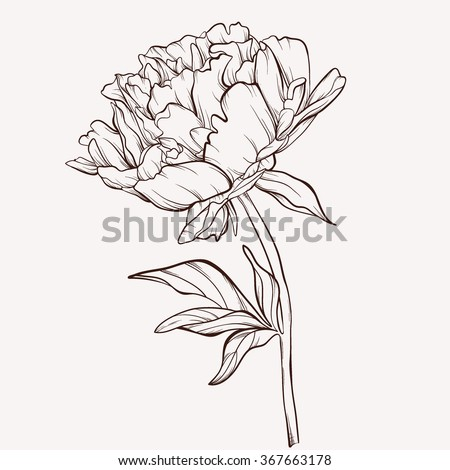 Peony flower isolated on white stock vector 368014568 shutterstock - Vector Peony Flower Isolated On White Stock Vector