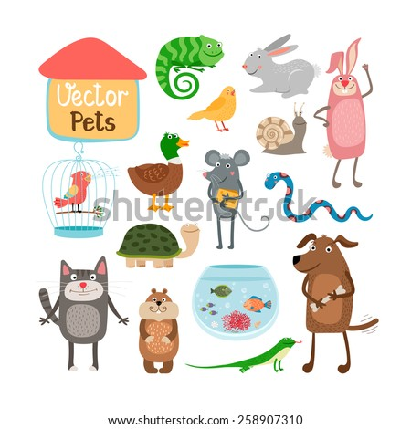 Vector pets illustration isolated on white background - stock vector