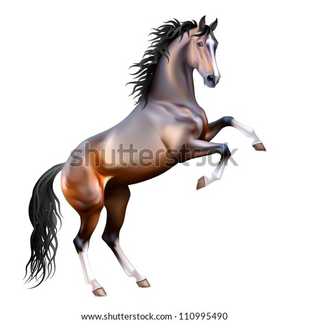Vector photo-realistic bay horse rearing up isolated on white background - stock vector