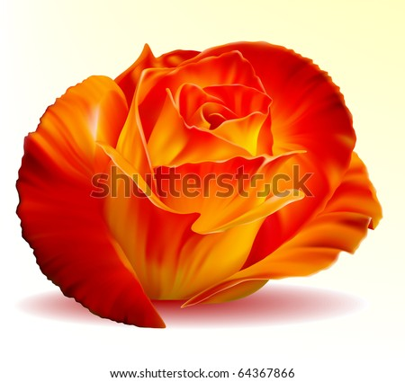 Vector photo-realistic beautiful fiery rose on a white background - stock vector